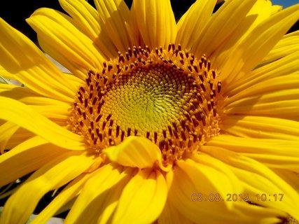 FOTKA - 31.7. - 3.8. - 21 - léto a kytky
