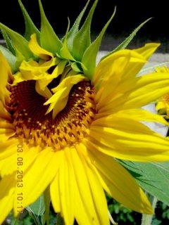 FOTKA - 31.7. - 3.8. - 22 - léto a kytky