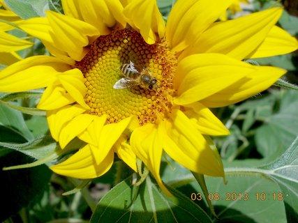 FOTKA - 31.7. - 3.8. - 25 - léto a kytky