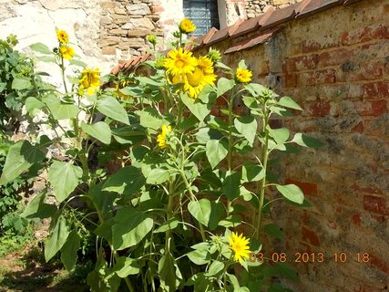 FOTKA - 31.7. - 3.8. - 26 - léto a kytky