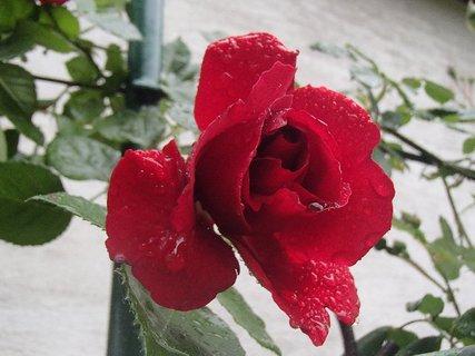 FOTKA - po včerajšom daždi