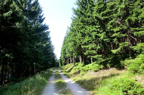 FOTKA - Příjemná cesta pod Pěnkavčím vrchem