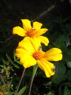 FOTKA - 4.srpna - 19 - s mouchama květ