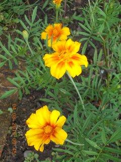 FOTKA - 4.srpna - 23 - po dešti, už osychají květy