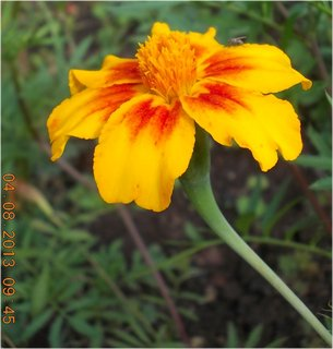 FOTKA - 4.srpna - 24 - po dešti, už osychají květy