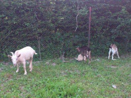 FOTKA - Vápenky, zvířata v ohradě 7