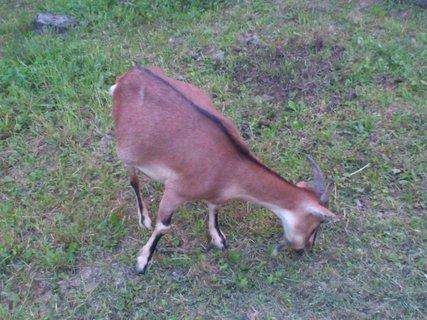 FOTKA - Vápenky, zvířata v ohradě 8