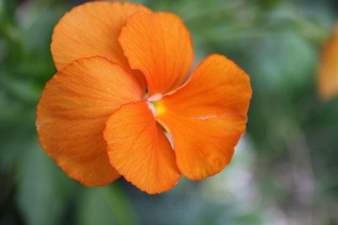 FOTKA - oran�..,