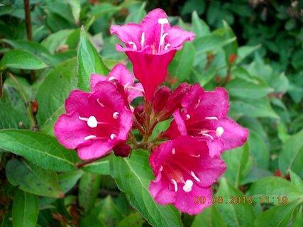 FOTKA - 8.8 + 9.8. - 25 - krása Wiegely