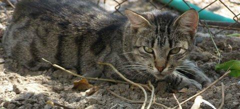 FOTKA - kočky15-8-3