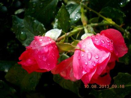 FOTKA - 9.8 + 10.8 - 15 - po dešti kapky