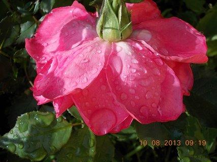 FOTKA - 9.8 + 10.8 - 16 - po dešti kapky