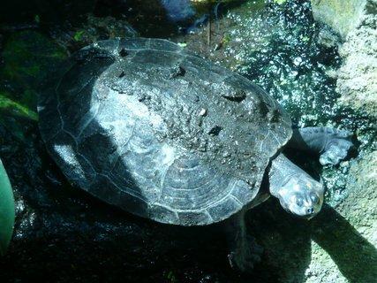 FOTKA - Pavilon Yucatan - želva