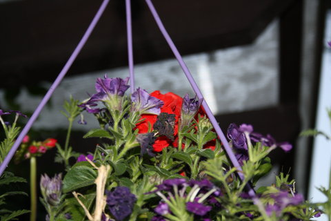 FOTKA - závěs lila