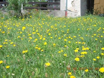 FOTKA - 14.8 + 15.8. - 5 - žluto - zelený koberec