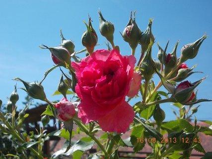 FOTKA - 15.8. + 16.8. - 18 - krása
