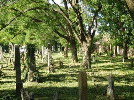 FOTKA - židovský hřbitov v Podivíně/  jižní Morava