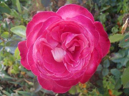 FOTKA - ružička pre vás