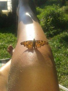 FOTKA - 16 - 19.8. - 19 - mami, motýlek se do mně asi zamiloval, mi psala dcera