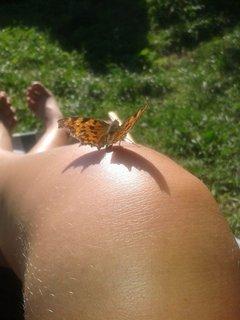FOTKA - 16 - 19.8. - 21 - mami, motýlek se do mně asi zamiloval, mi psala dcera