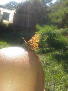 FOTKA - 16 - 19.8. - 22 - mami, motýlek se do mně asi zamiloval, mi psala dcera