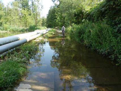 FOTKA - v lužních lesích nebývá o vodu nouze (u ropovodu poblíž Hodonína)