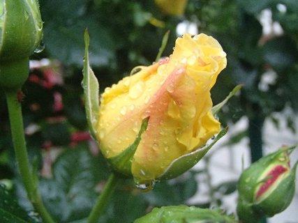 FOTKA - 20.08.2013 po daždi