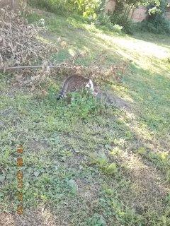 FOTKA -  18.8. - 10 - zahrada a Madlenka, čeká na mně
