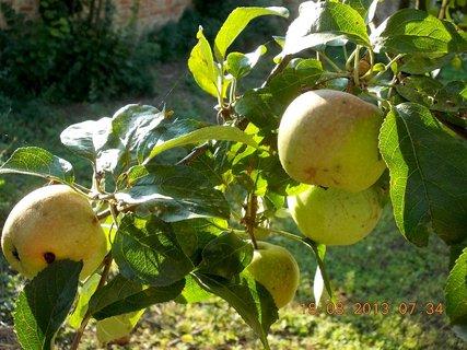 FOTKA -  18.8. - 11 - podzimní jablka
