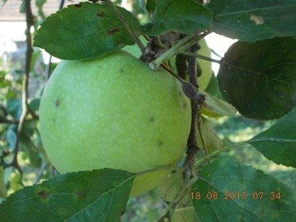 FOTKA -  18.8. - 15 - podzimní jablko