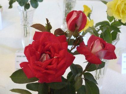 FOTKA - Výstava růží .