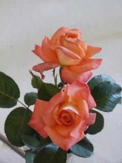 FOTKA - Výstava růží ...