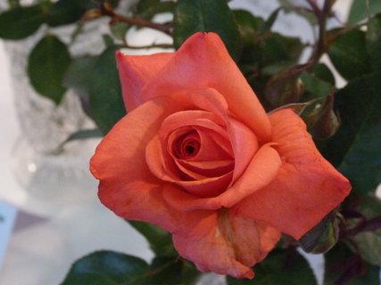 FOTKA - Výstava růží .....