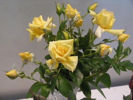 FOTKA - Výstava růží ......
