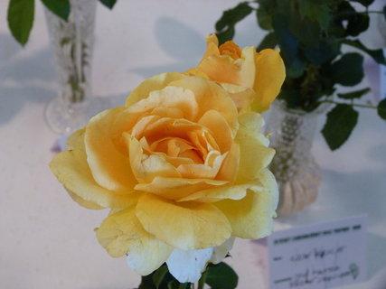 FOTKA - Výstava růží ,,,,