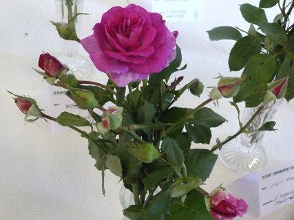 FOTKA - Výstava růží ,,,,,