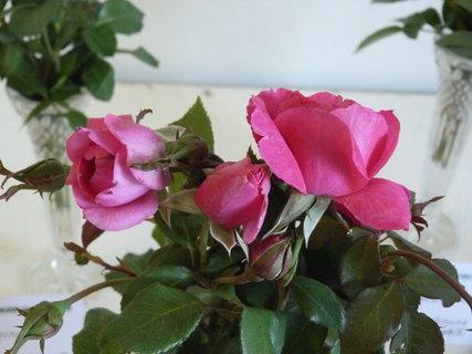 FOTKA - Výstava růží ,,,,,,