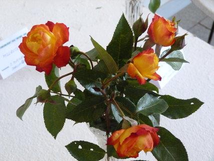FOTKA - Výstava růží ,,,,,,,