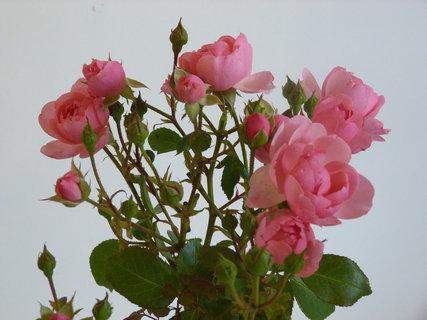 FOTKA - Výstava růží ,,,,,,,,