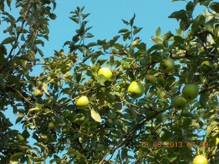 FOTKA - 18. srpna - 3 - na jabloni je pár jalblek
