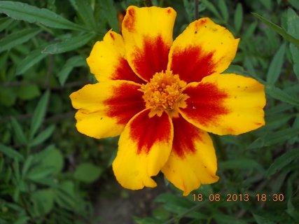 FOTKA - 18. srpna - 26 - žluto - červený