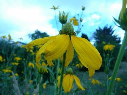 FOTKA - Žluté ....,