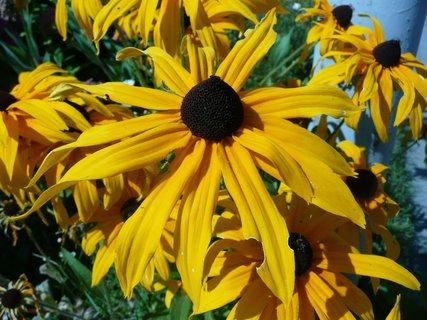 FOTKA - Žluté v zahradě