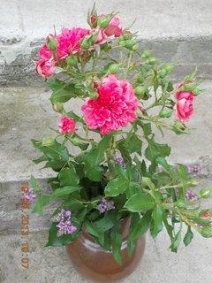 FOTKA - 19.8. - 8 - kytka domů do vázy