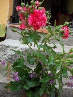 FOTKA - 19.8. - 9 - kytka domů do vázy