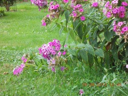 FOTKA - 19.8. - 13 - kvetou