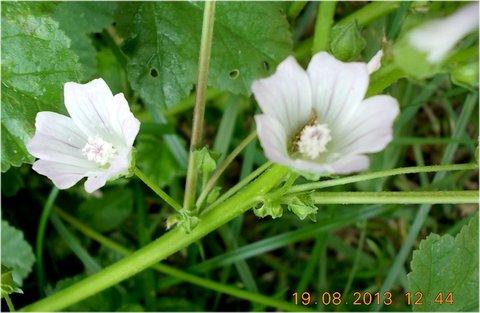 FOTKA - 19.8. - 14 - kvetou