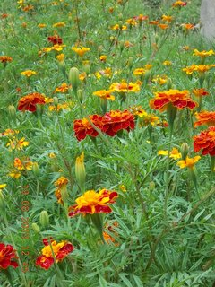 FOTKA - 19.8. - 16 - kvetou