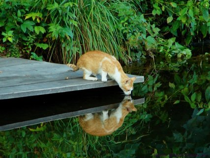 FOTKA - Zrcadlení