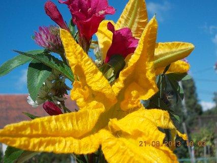 FOTKA - 21.8. - 8 - malou kytičku do malé vázy jsem si chystala
